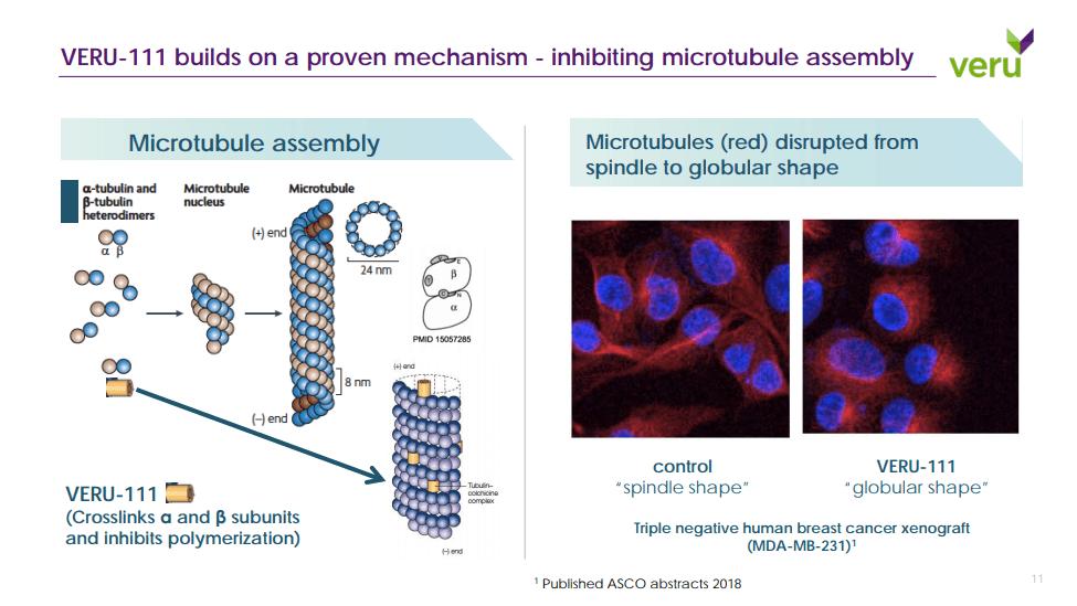 Veru-111 Destabilizes Microtubule assembly